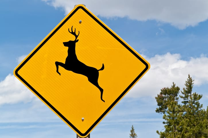What to Do if You Hit an Animal in the Road